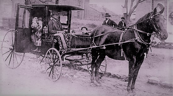 Black coachman