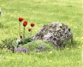 historic-crosses-tombstones-small-cemetery-ospevika-norway-may-norwegian-early-spring-old-covered-rust-granite-78263911